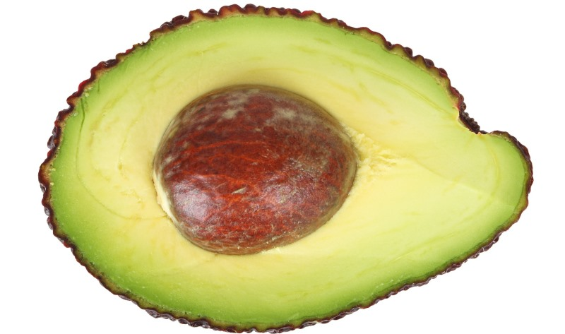 avocado_New_Love_Times