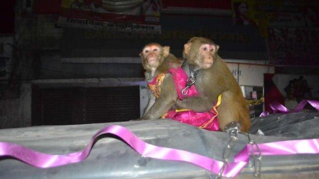 ramu and ramdulari on a bedecked suv during their wedding procession
