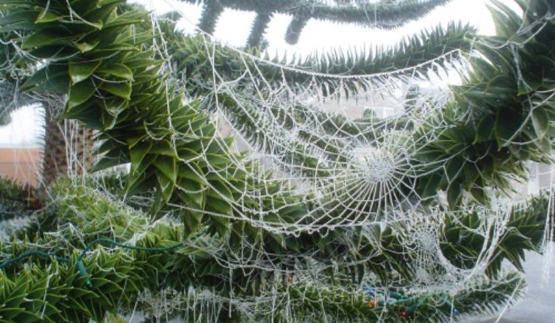 christmas tree decorated with spider web