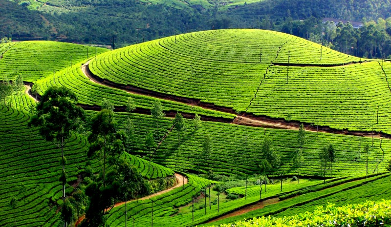 a scenic view of the rolling tea gardens of munnar
