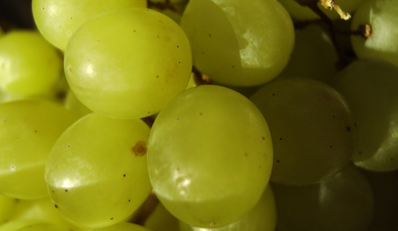 grapes_New_Love_Times