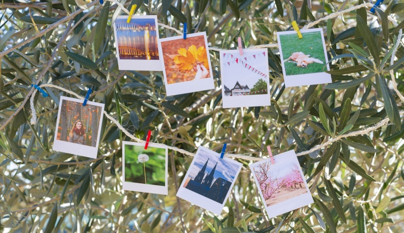 polaroid tree