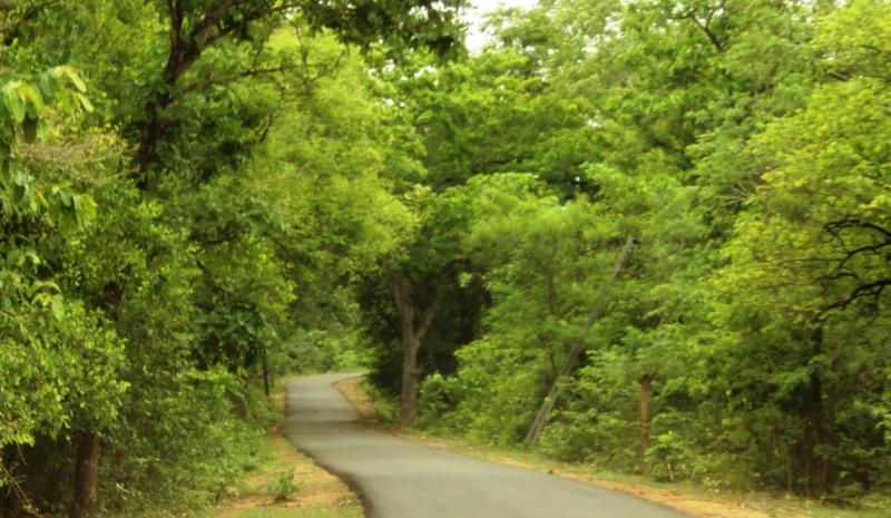 road to maredumilli