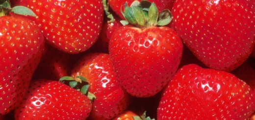strawberries_New_Love_Times