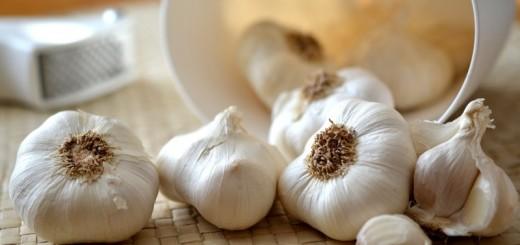 garlic_New_Love_Times