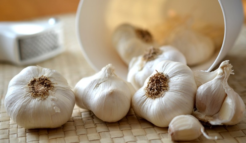 garlic_New_Love_Times