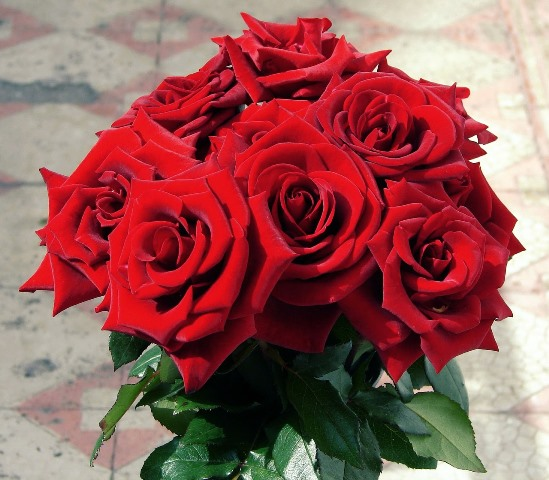 red roses_New_Love_Times