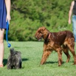 9 Best Home Remedies For Tick Bites In Dogs