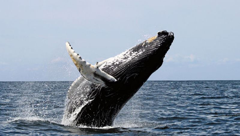 whale watching, mexico