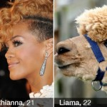 Double Dating App Trolled With Pictures Of Celebrities Matched With Animals And Things!
