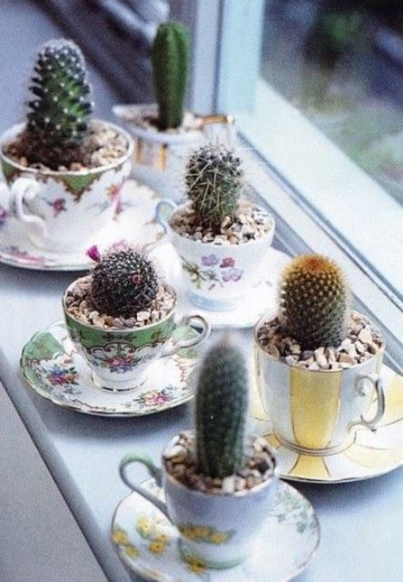 fall favor succulent tea cups