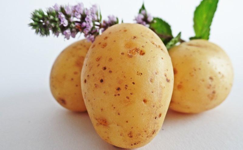 potatoes_New_Love_Times