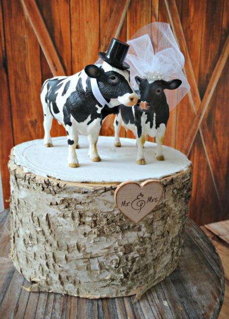 rustic dairy farm cows topper