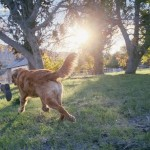 7 Safe And Natural Home Remedies For Dog Allergies