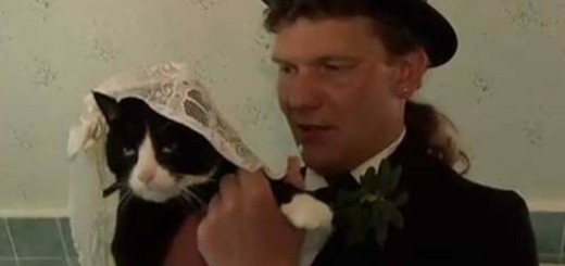 Married cat