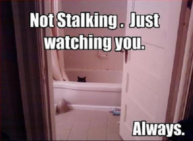 fb status stalking