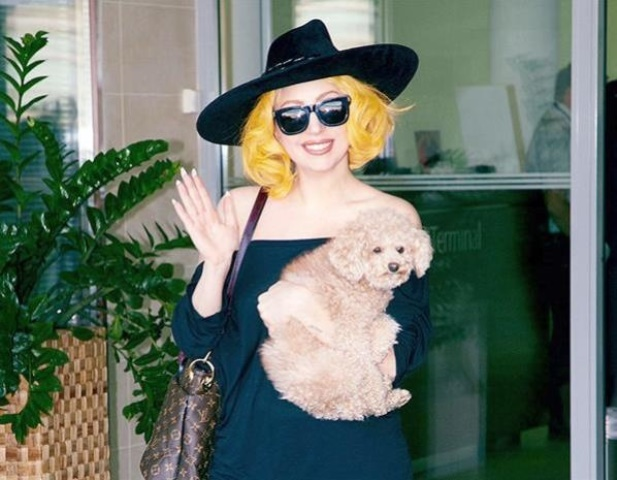 celebrity pet lady gaga_New_Love_Times