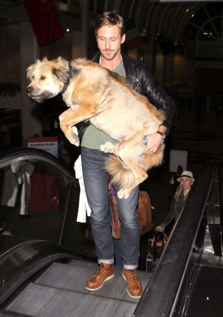 celebrity pet ryan gosling_NEw_Love_Times