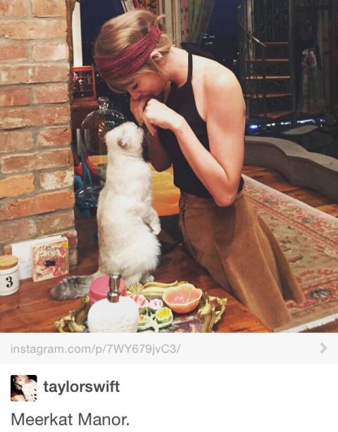 celebrity pet taylor swift_New_Love_Times