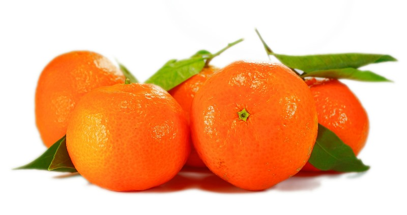 oranges_New_Love_Times