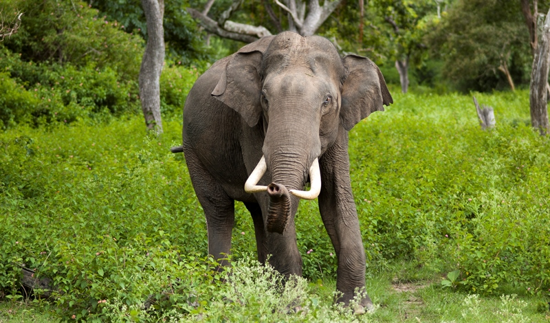 an elephant at the bandipur national park_New_Love_Times