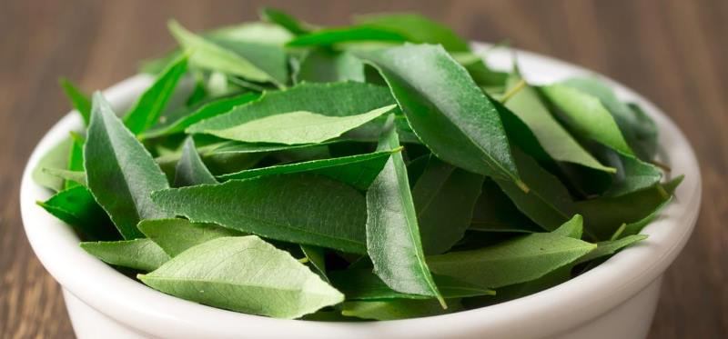 curry leaves_New_Love_Times
