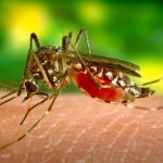 12 Amazing Home Remedies For Malaria Which Are Natural As Well As Effective