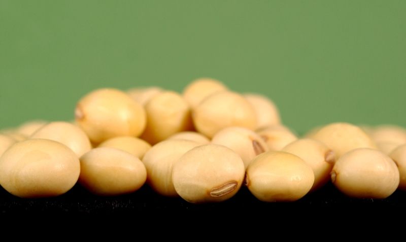 soybeans_New_Love_Times
