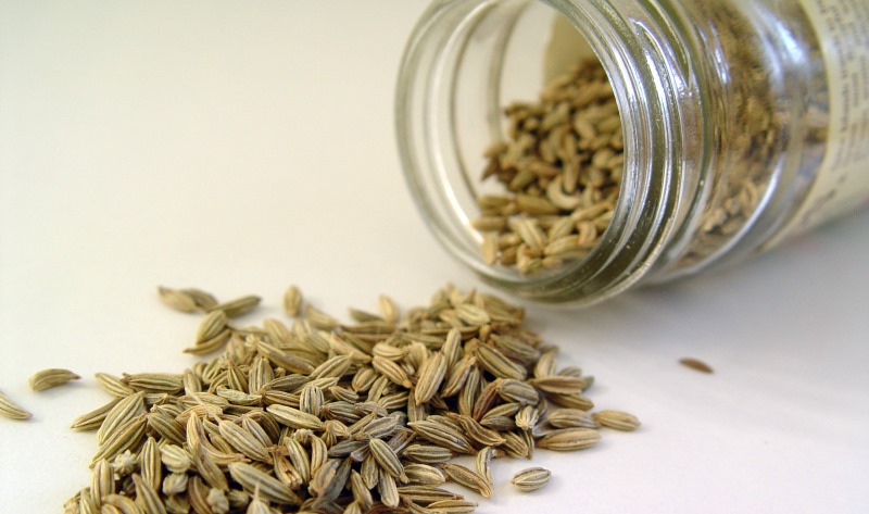 fennel seeds_New_Love_Times