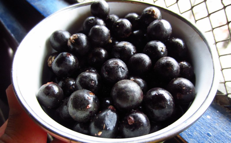 list of superfoods_New_Love_Times