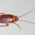 15 Highly Effective Natural Home Remedies For Killing Cockroaches