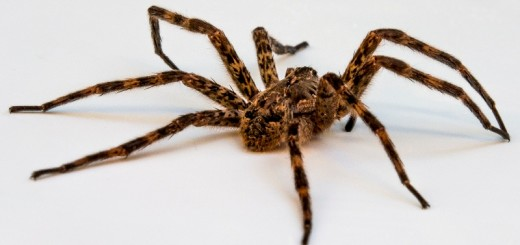 home remedies for spider bites_New_Love_Times
