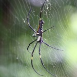 18 Easy, Natural, And Effective Home Remedies To Get Rid Of Spiders From Your Home