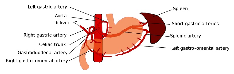 home remedies for gastroparesis_New_Love_Times