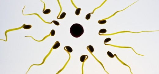home remedies to increase sperm count_new_love_times