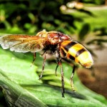 9 Super Effective Home Remedies For Yellow Jacket Stings