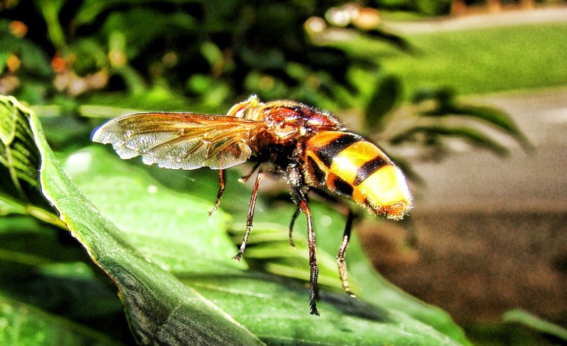Home Remedies For Yellow Jacket Stings_New_Love_Times